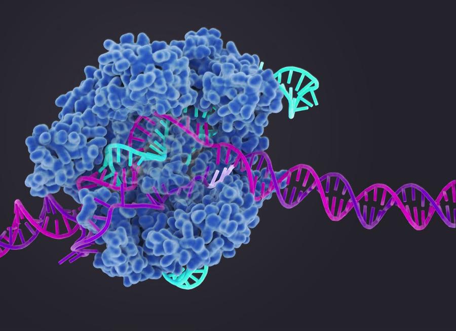 CRISPR-Cas9_in_action