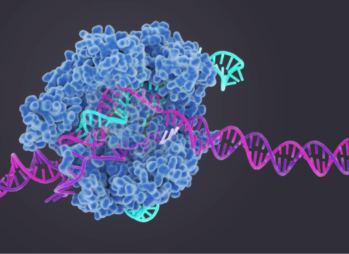 CRISPR-Cas9_in_action